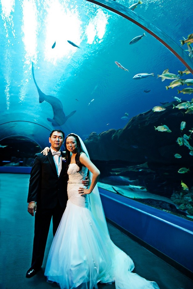 unique wedding ideas aquarium weddings