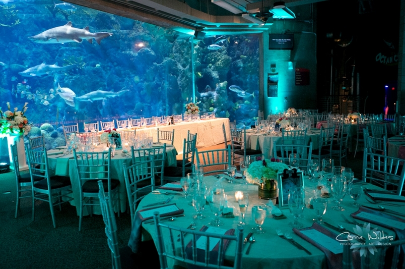 Unique Wedding Ideas Aquarium Venues Photos Invitations Amp Tips