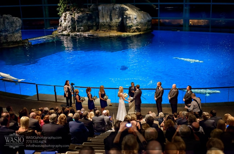 unique wedding ideas aquarium wedding