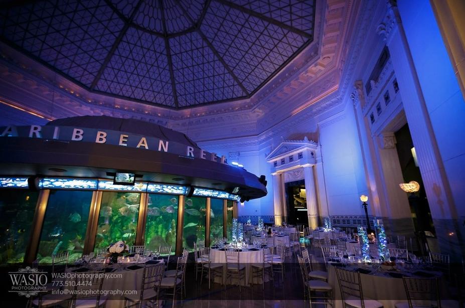 unique wedding ideas aquarium wedding